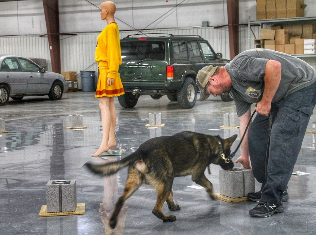 trainer working with explosive detection canine