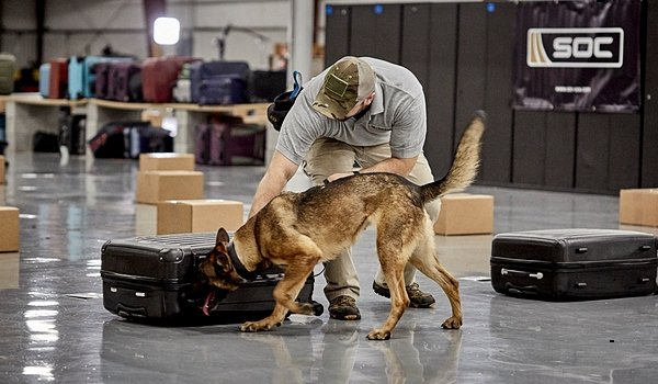 Bomb sniffing dog with handler