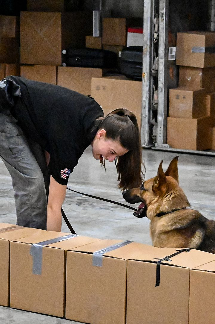 K9 and trainer searching boxes